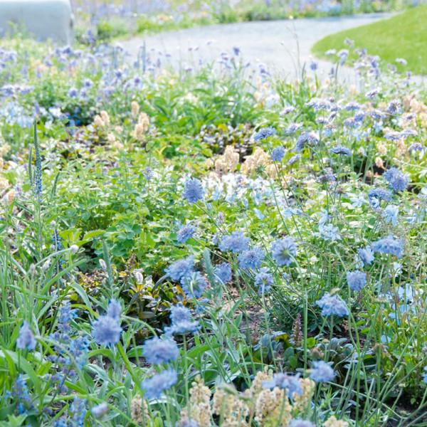 Beetpaket in den Farben Blau und Weiß