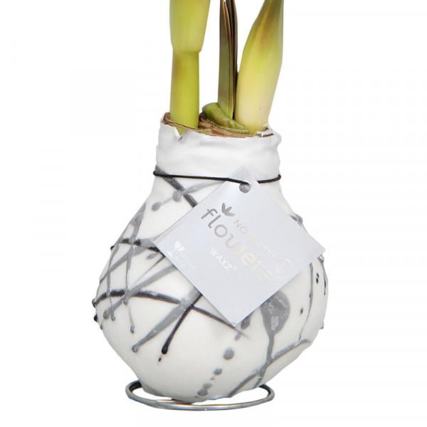 Amaryllis in Wachs Vermeer Weiß