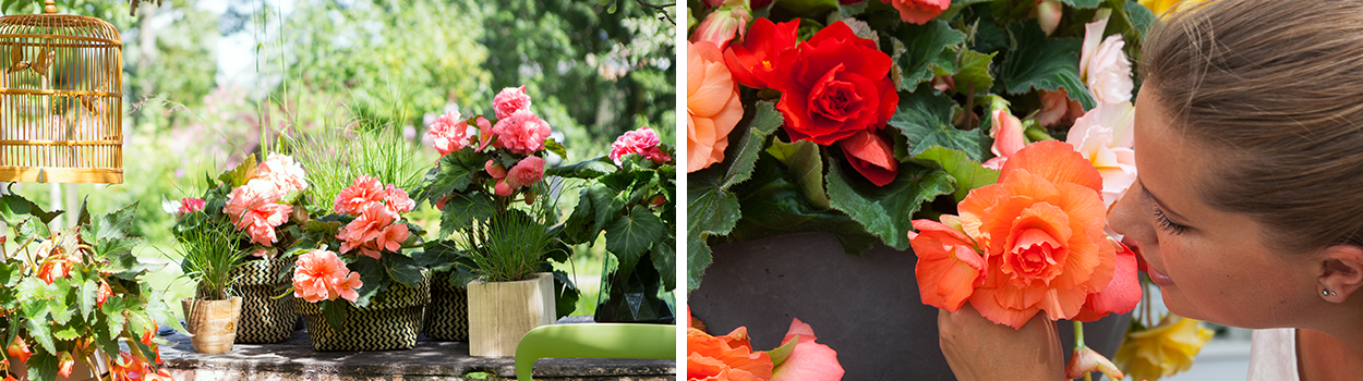 Alles-over-Begonias-sub