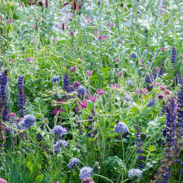 Beetpaket für einen bienenfreundlichen Garten