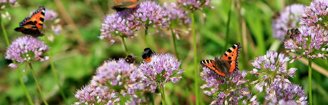 Meehelpen-aan-de-biodiversiteit-sub02