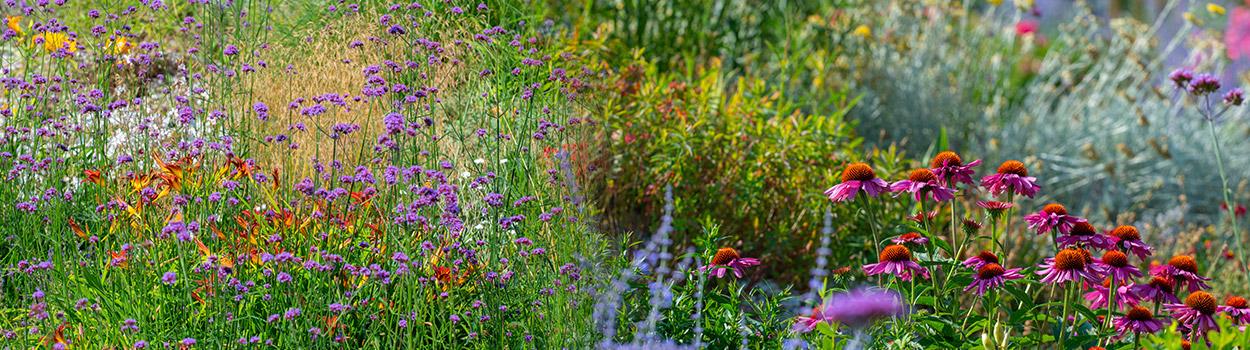 Combinatie-bloembollen-vaste-planten-sub1