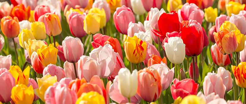 Frühjahrsblühende Pakete