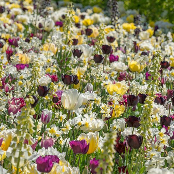 Mischung Joy of Spring 125