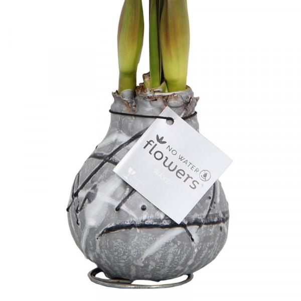 Amaryllis in Wachs Vermeer Silber