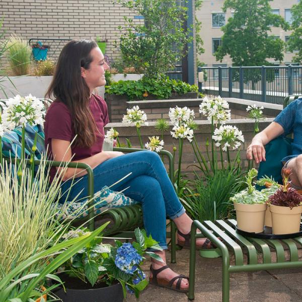 Terrassen und Balkon Pflanzenpaket