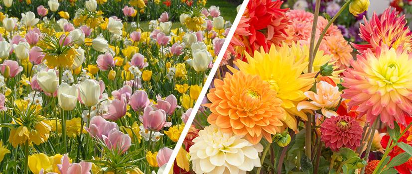 Blumenzwiebel Pakete