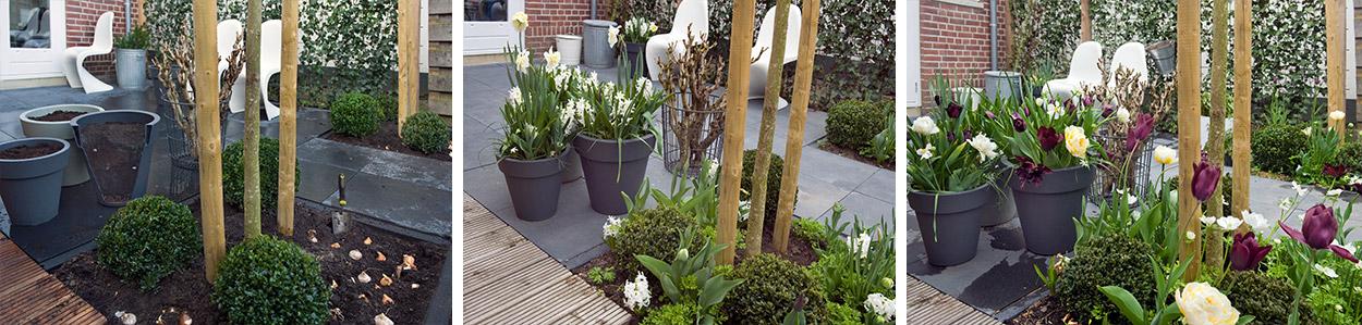Waar-planten-subimage