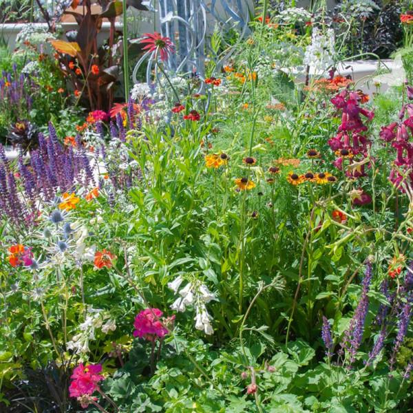 Beetpaket für einen schmetterlingsfreundlichen Garten